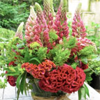 Las Flores de Tadea