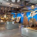 MNCN · Museo Nacional de Ciencias Naturales