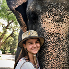 Elefant Travel India