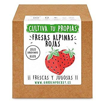 Kit fresas
