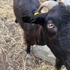 De pastoreo a Guadarrama